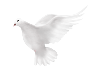 Dove Peace Png PNG images