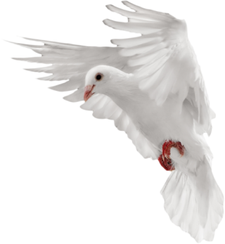 Dove, Pigeon PNG Transparent Image PNG images