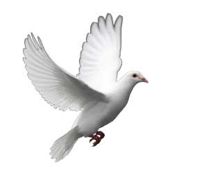 Dove Png Photo PNG images