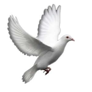 Dove Png Picture PNG images