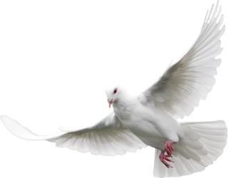 Dove Png Transparent Background PNG images