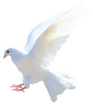 Dove PNG Transparent Image PNG images
