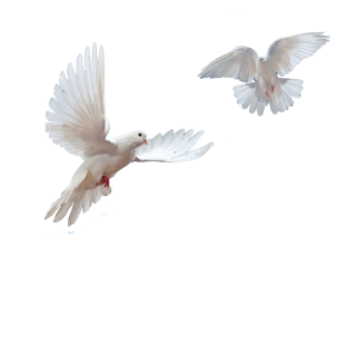 Doves Flying In Sky Png PNG images
