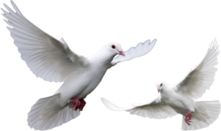 Doves Png PNG images