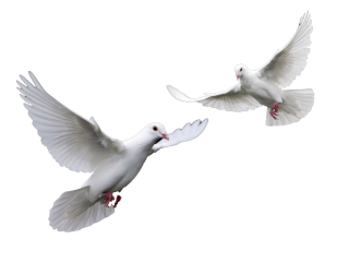 Doves Wedding Doves Png PNG images