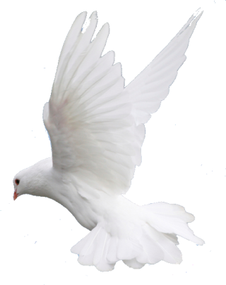 Fly, Flying, Dove, Wedding Image Png PNG images