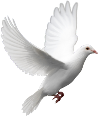Flying Dove Png PNG images