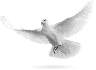 Simple Dove Png Pictures PNG images