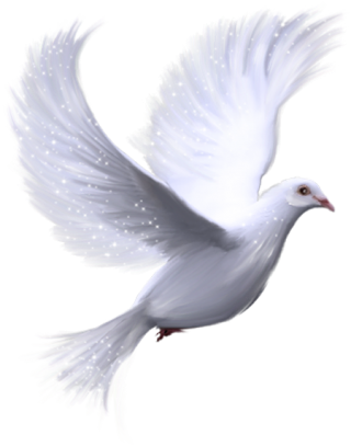 White Dove Background Design PNG images