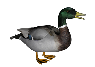 Download Free High-quality Duck Png Transparent Images PNG images