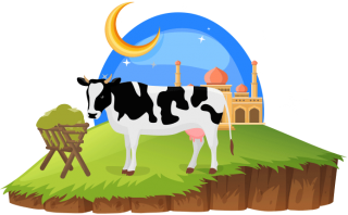 Feast Of Sacrifice, Eid Qurban, Eid Mubarak, Cow PNG images