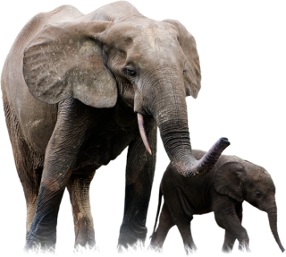 Elephant Png Elephant Transparent Background Freeiconspng In this category elephant we have 31 free png images with transparent background. elephant png elephant transparent