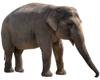Elephant Png Elephant Transparent Background Freeiconspng Find & download free graphic resources for elephant. elephant png elephant transparent