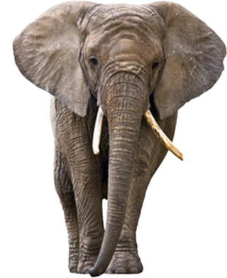 Elephant Png Elephant Transparent Background Freeiconspng All elephant png images are displayed below available in 100% png transparent white background for free download. elephant png elephant transparent