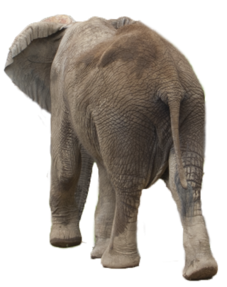 Elephant Png Elephant Transparent Background Freeiconspng Elephant front and back is one of the clipart about elephant pictures clip art,back clipart,car clipart front view. elephant png elephant transparent