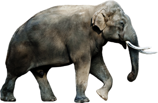 Elephant Png Elephant Transparent Background Freeiconspng Elephant png cliparts, all these png images has no background, free & unlimited downloads. elephant png elephant transparent