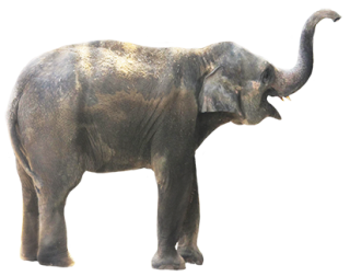 Elephant Png Elephant Transparent Background Freeiconspng ✓ free for commercial use ✓ high quality images. elephant png elephant transparent