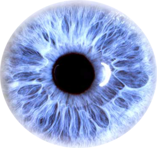 Eyes PNG File PNG images