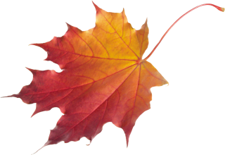 Falling Leaves Transparent Photo PNG images