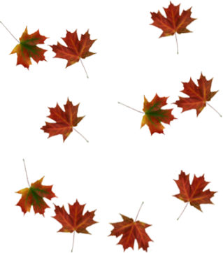 Picture PNG Falling Leaves PNG images