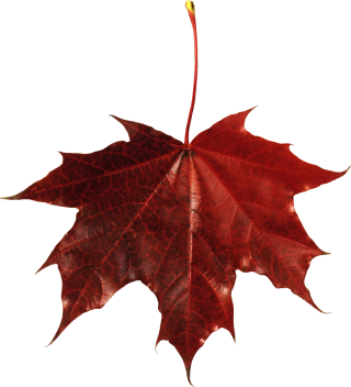 Free Falling Leaves Download Vector Png PNG images
