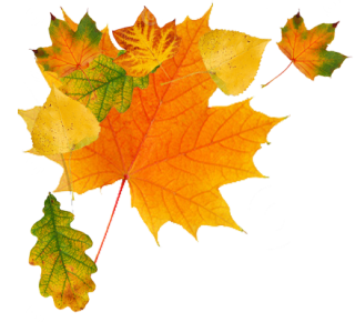 Falling Leaves PNG HD PNG images