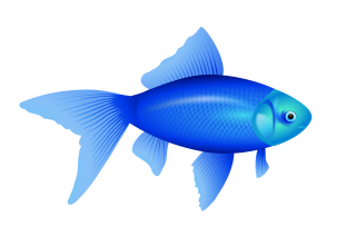 Blue Fish PNG Image PNG images