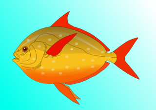 Colorful Fish In Water PNG images