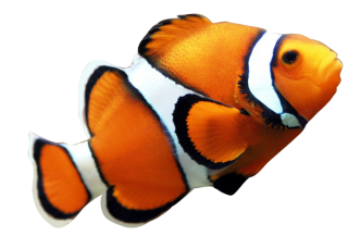 Fish Png PNG images