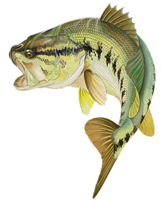 Fly Fish Orlando PNG images