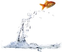 Flying Fish Water PNG images