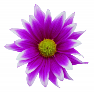 Purple Flower Png PNG images