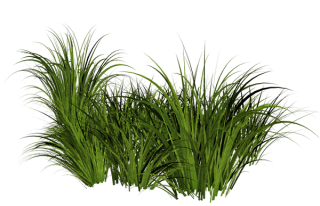 Grass Pic PNG PNG images