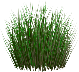 PNG Grass Image PNG images
