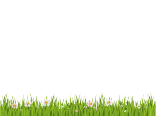 Green Grass On White Background Png PNG images