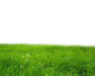 Png Grass PNG images