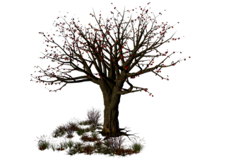 Best Free Halloween Tree Png Image PNG images