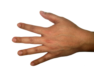 Hands Png Photo PNG images