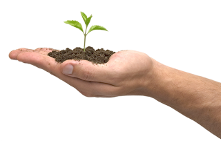 Soil, Tree, Hands Png PNG images