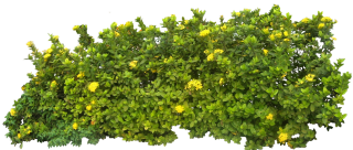 Download And Use Hedges Png Clipart PNG images