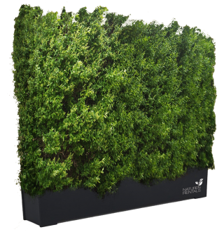 Get Hedges Png Pictures PNG images