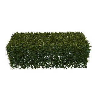 PNG Hedges Free Download PNG images