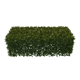 PNG Hedges Pic PNG images