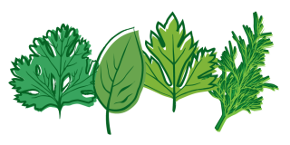 Transparent Png Herbs PNG images
