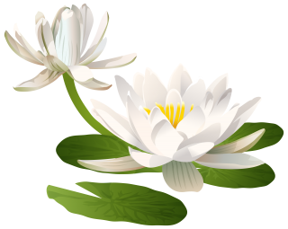 Lilies Png Format Images Of Lily PNG images