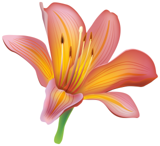 Lily Designs Png Flowers PNG images