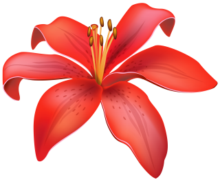 Red Lily PNG HD PNG images
