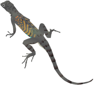 Gecko, Iguana, Lizard, Reptile, Salamander Icon PNG images