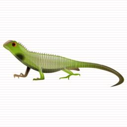 Lizard Size Icon PNG images