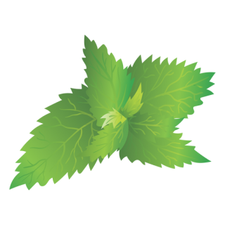 Hd Nettle Picture Transparent Background PNG images